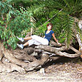 Manly_scenic_walk_14