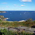 Manly_scenic_walk_31