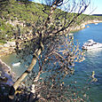 Manly_scenic_walk_34