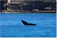 Whale_2_2